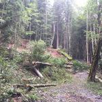 Bäume fallen